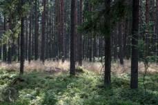 blueberry_woods_0002p
