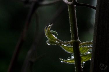 rainy_0170p