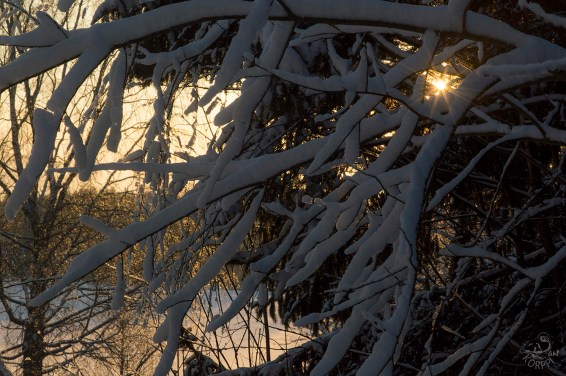 sun_and_snow_0052p