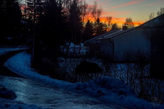 sunset_0110p