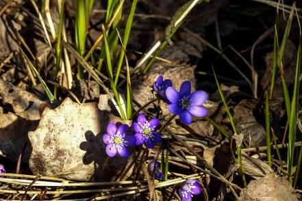 anemones_islet2057p