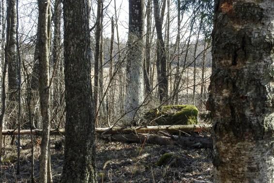 old_trees_islet_2064p
