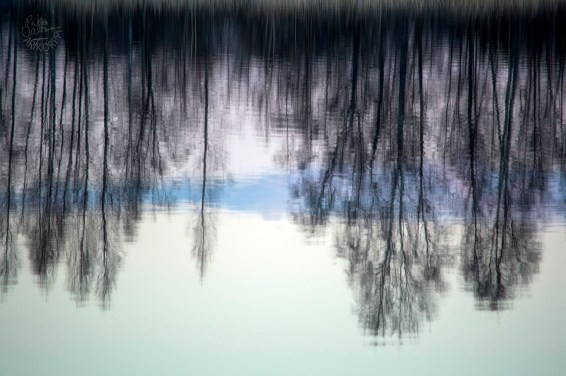 reflection_0065p