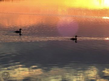 sunset_2403p
