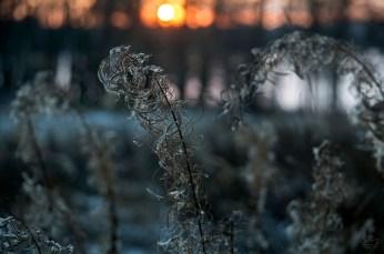 sunrise_horsmat_0133p
