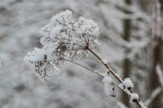 luminen_0088p