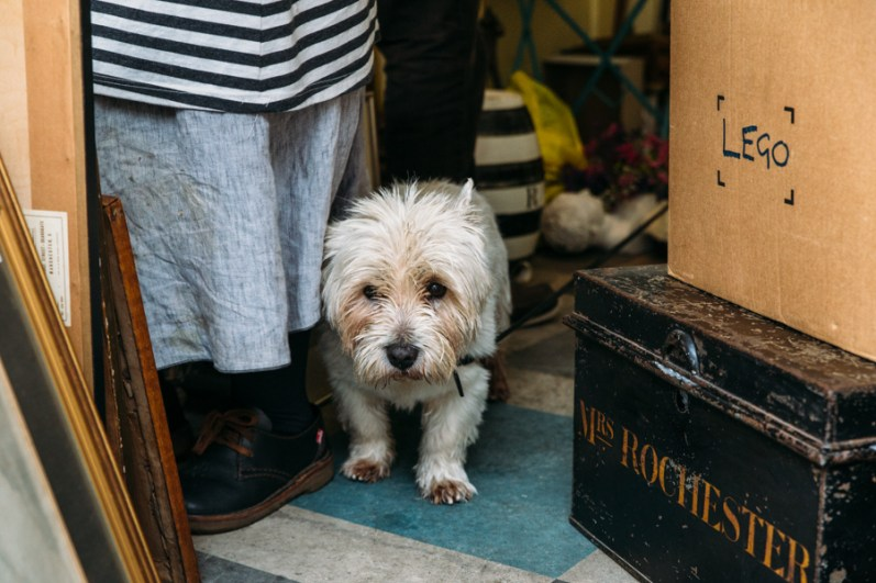 George the dog at Gabor Cossa Antiques