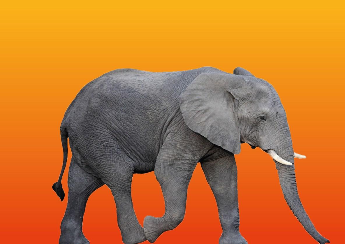 Afrique-4a