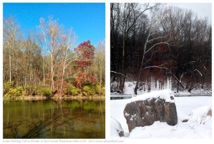 Color Shifting Fall to Winter in the Cornell Plantations Ithaca NY - photography by Alison Shull
