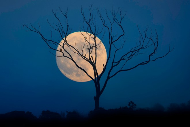 Moon rising over deep blue sky with stark tree in front