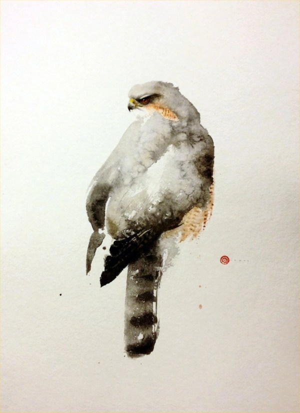 Karl Martens Sparrow Hawk