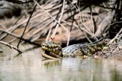 Michaela Bauerová vypráví, jak se jí podařilo vyfotit Lov na krokodýlí slzy