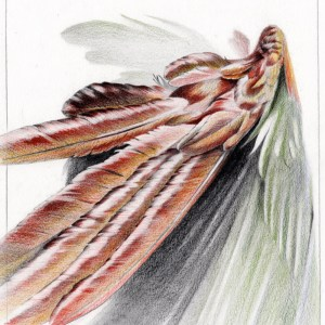 Ara Flügel Farbe Maximilian Hagstotz Zeichnung Grafik Kunst federn rot grün Kunst Grafik Geschenkidee Wandkunst individuell Unikat
