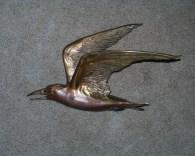 Tern - R. Clopton