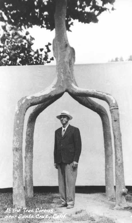 Основоположник арбоскульптуры, Аксель Эрландсон, под собственным творением