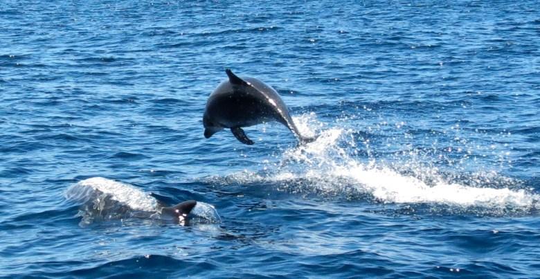 san-diego-dolphin-watching
