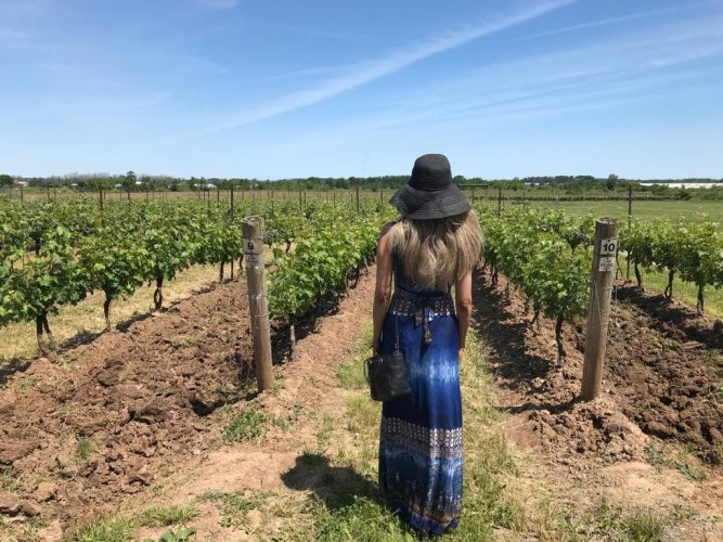 Viewing a Niagara region winery