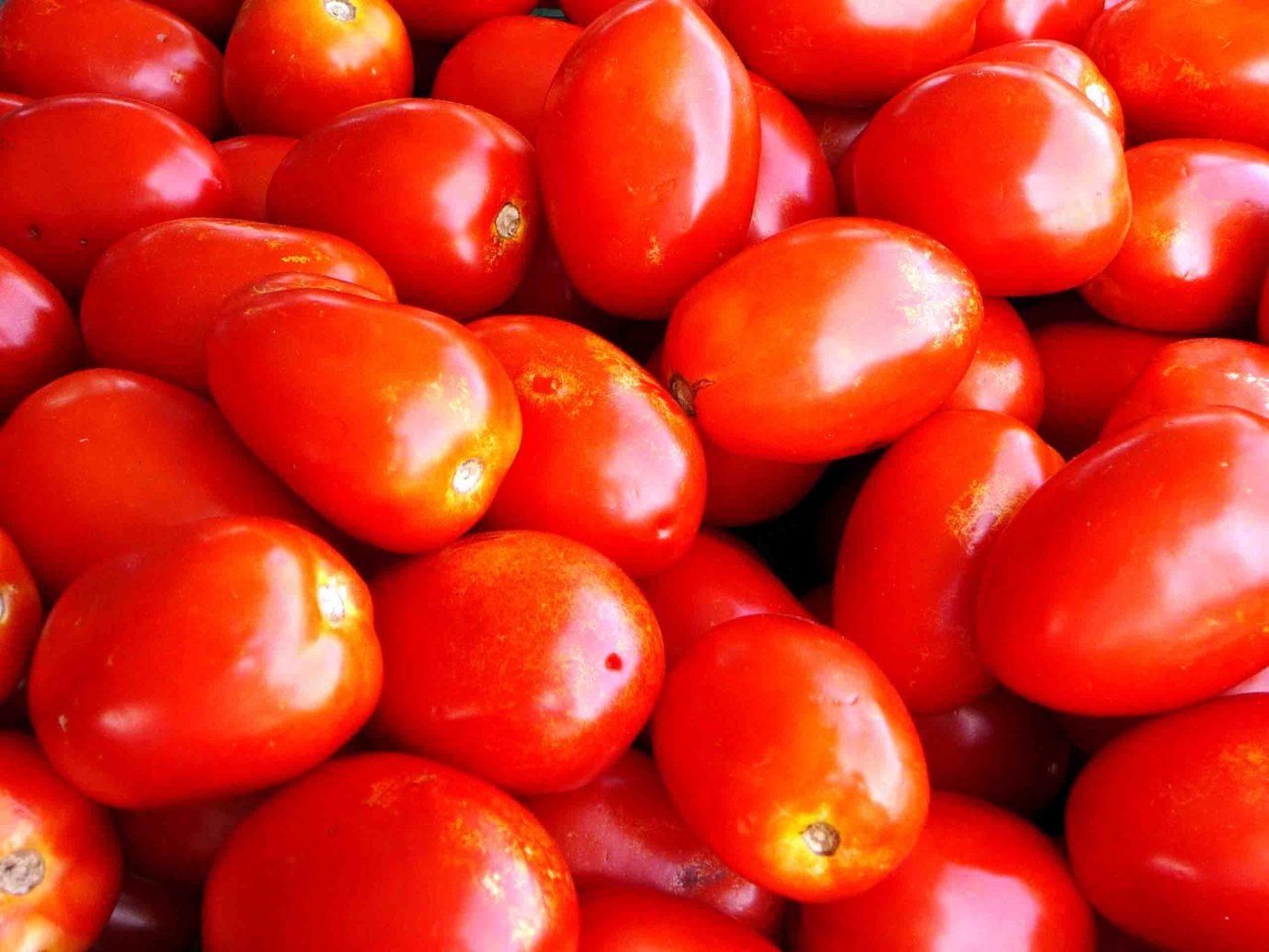 roma tomatoes for spicy spaghetti