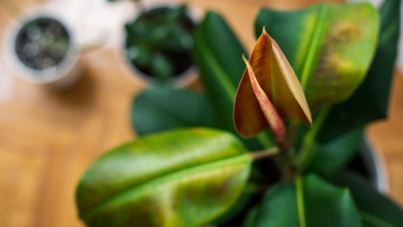 indoor plant natural energy booster