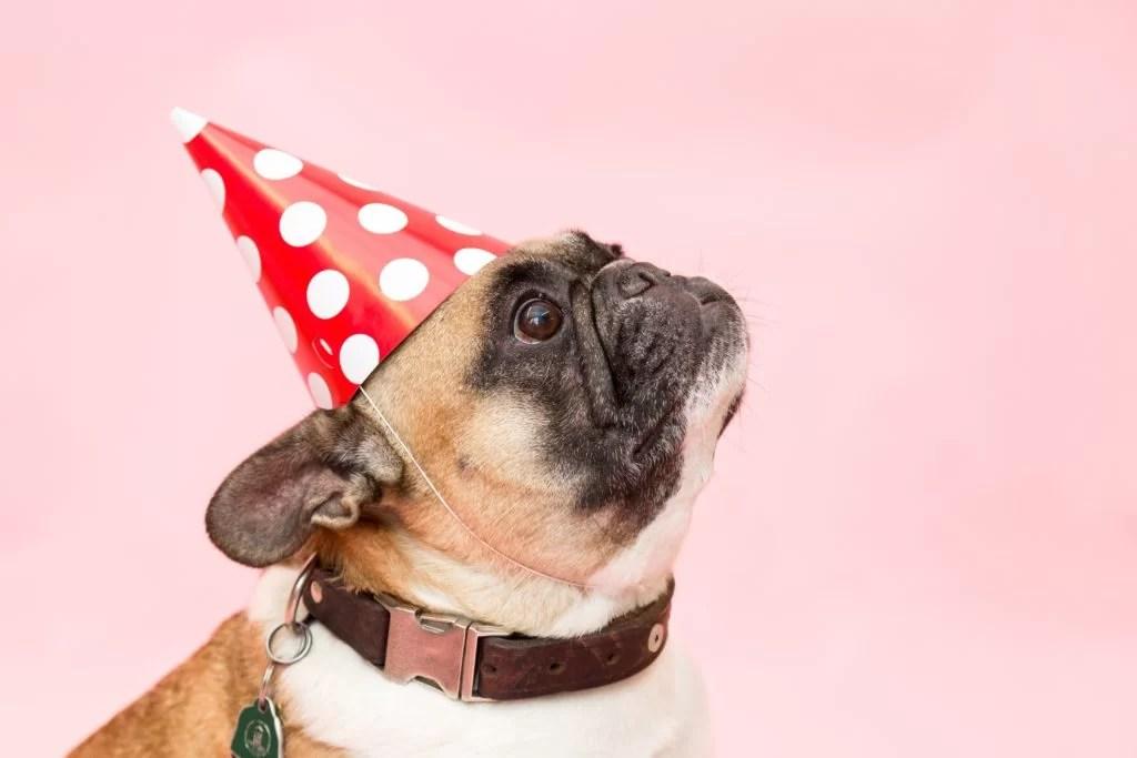dog-red-hat wondering