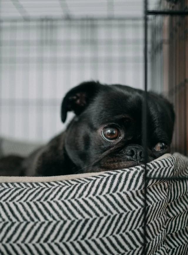 black-dog-relief