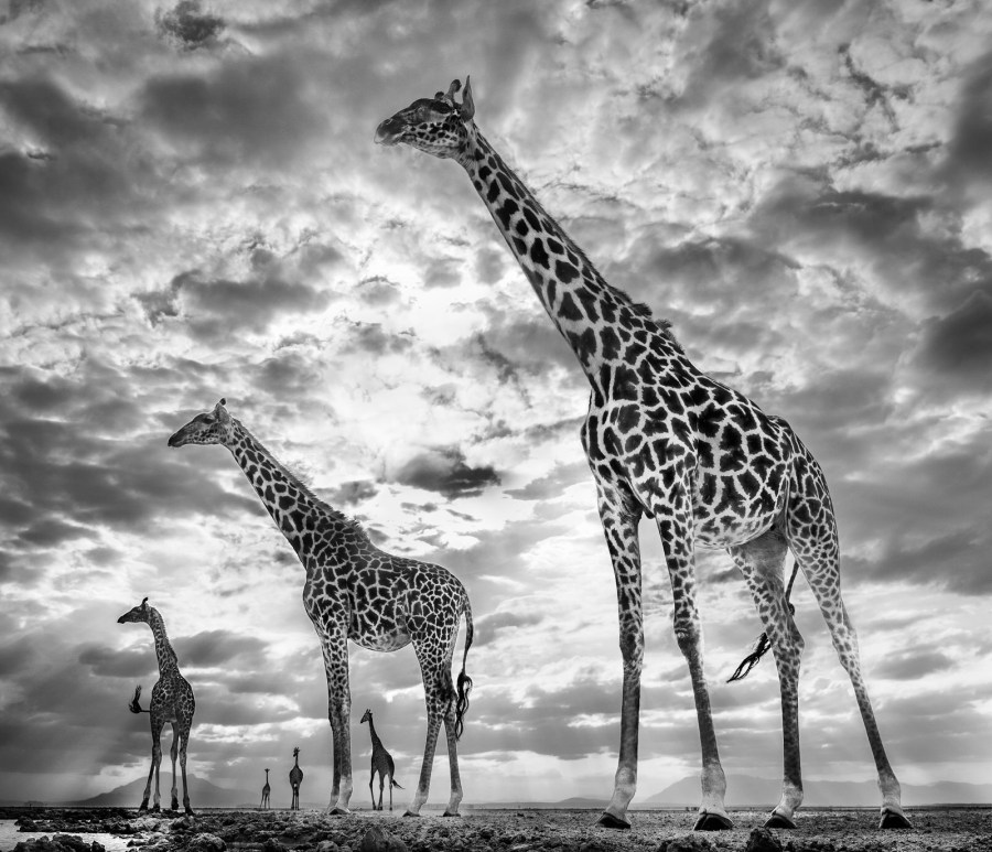 DAVID YARROW: keeping up with the crouches