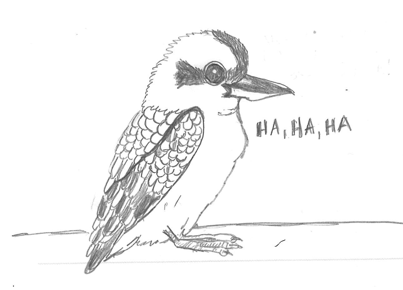 Kookaburra Colouring Page Sketch Coloring Page