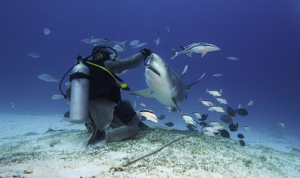 bull shark diving mexico