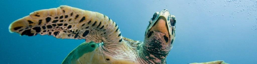 scuba diving gilis