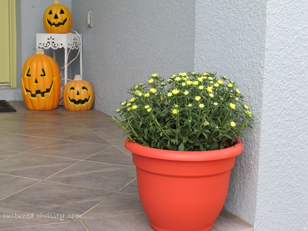yellow_mums_frontstep
