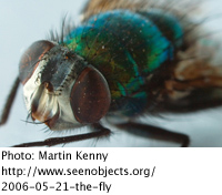 www.seenobjects.org/2006-05-21-the-fly