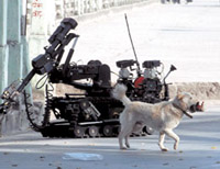 Dog Walks Away with Suspected Bomb