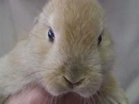 bunny-200