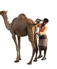 CamelUrin