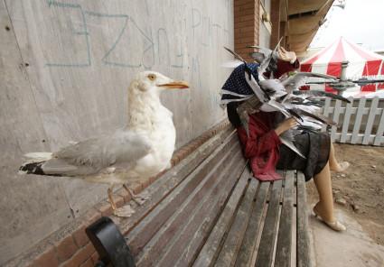 Pigeon hazard at Banksy's Dismaland theme park. Yui Mok / PA WIRE
