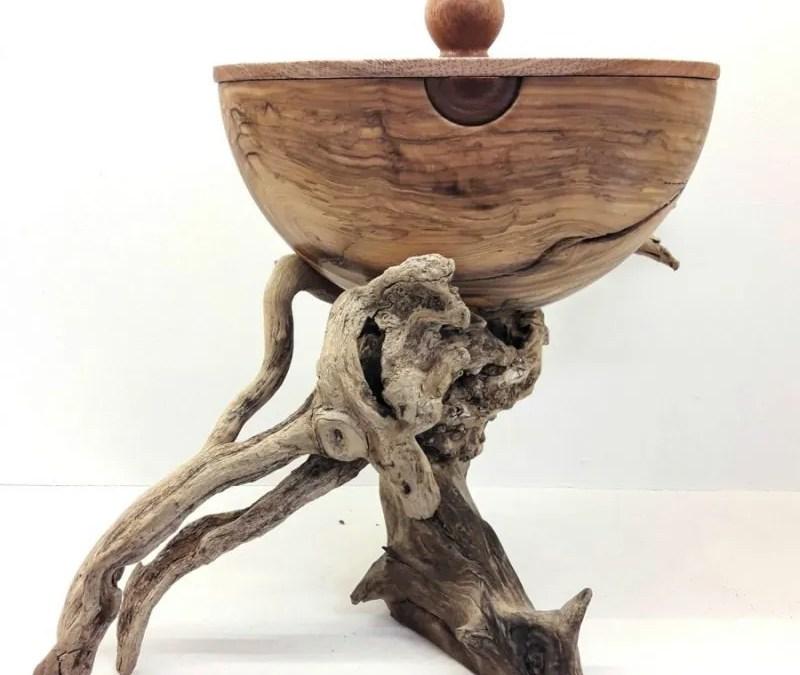 Medusa – Driftwood and Olive Wood