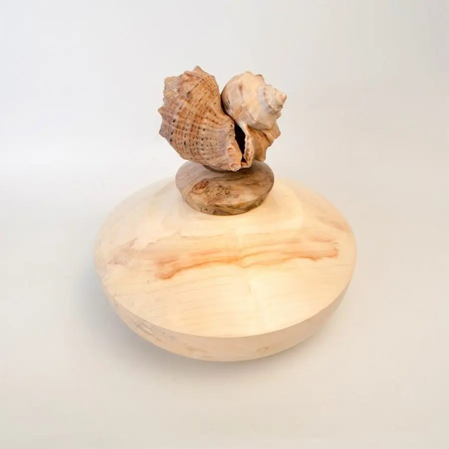 A maple wood base of a wood turned box with a sea shell lid on the top.