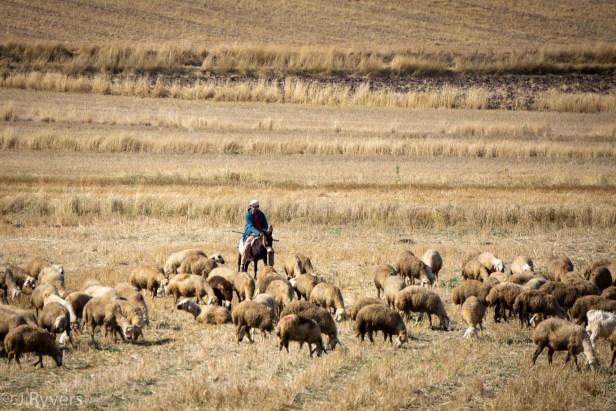 Çorum shephers Turkey