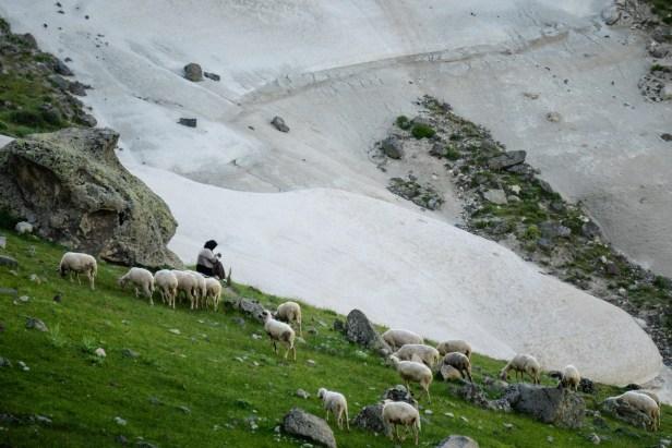 Ağın Dağ Shepherd