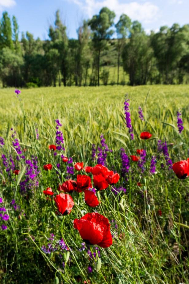 Blog Wildflowers