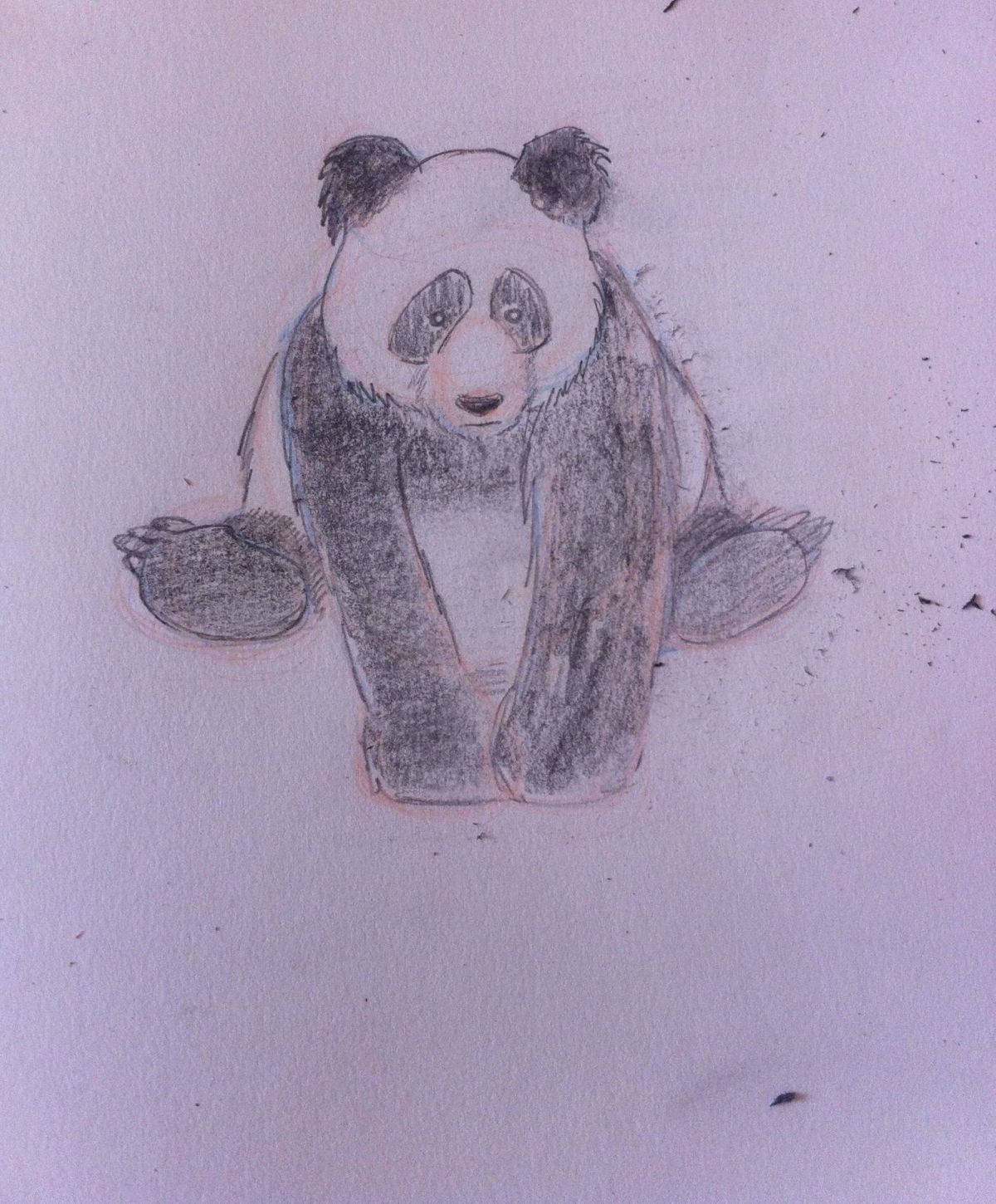 Panda by Catherine Booyse