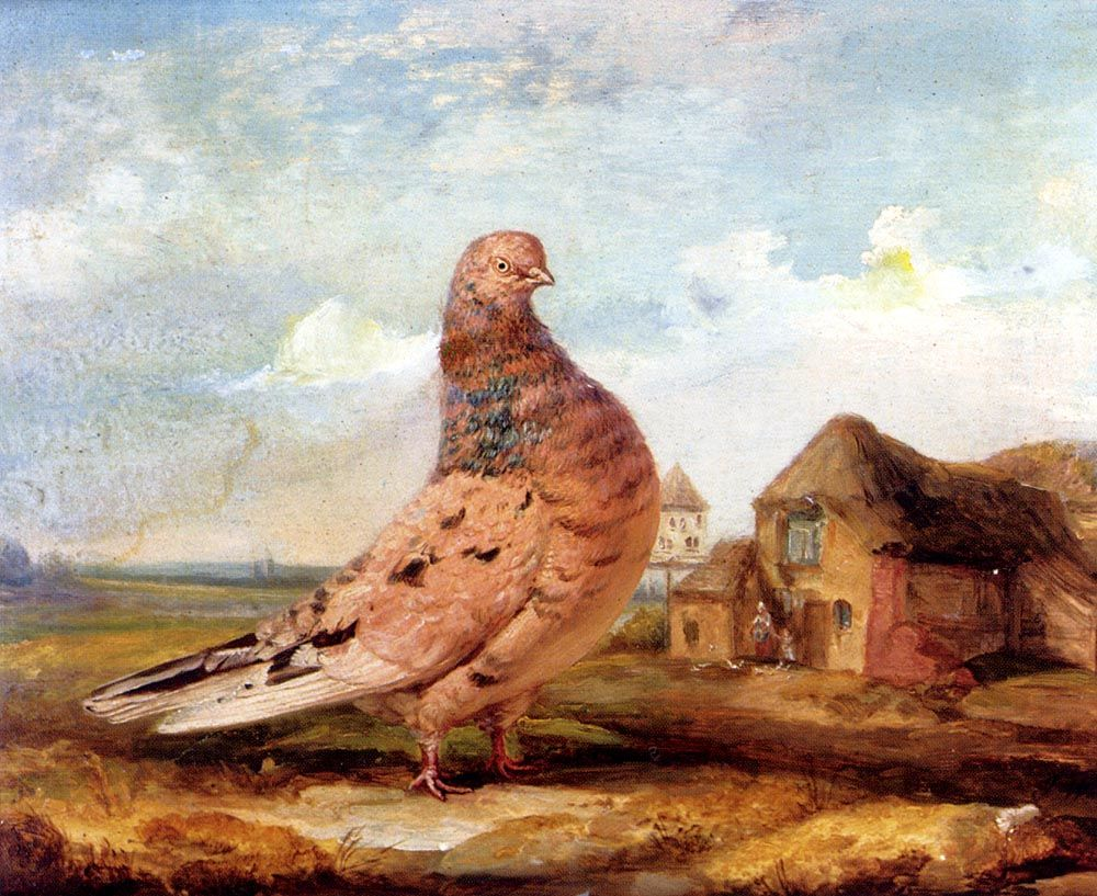 A Fancy Pigeon by James Ward