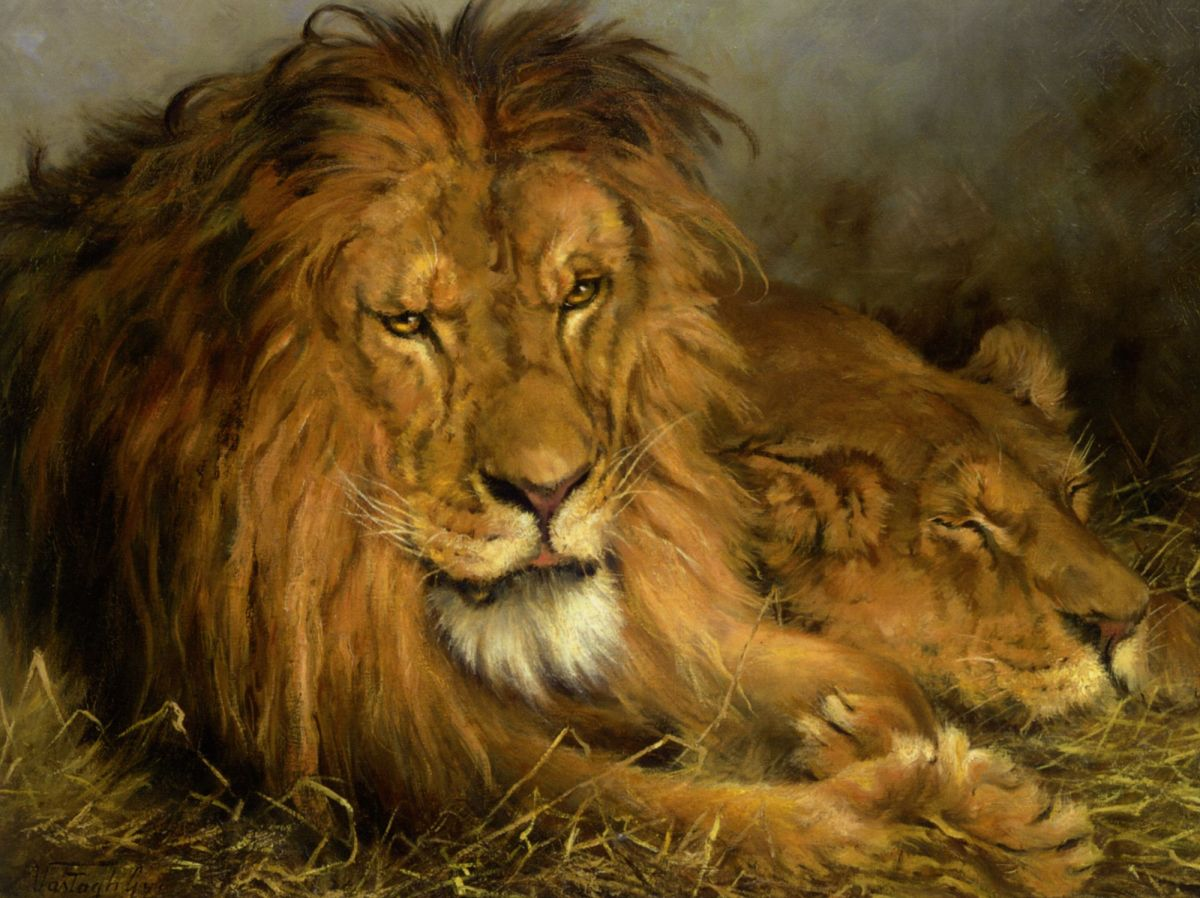A Lion and a Lioness by Geza Vastagh