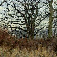 Woodland scene at twilight by William Fraser Garden