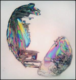 Chicken and Egg by Stefania Cortellazzi and Wanda Ariano