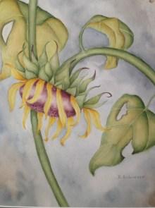 "Katherine Robinson 2010 Watercolor 13 ½"" * 16 ½"""