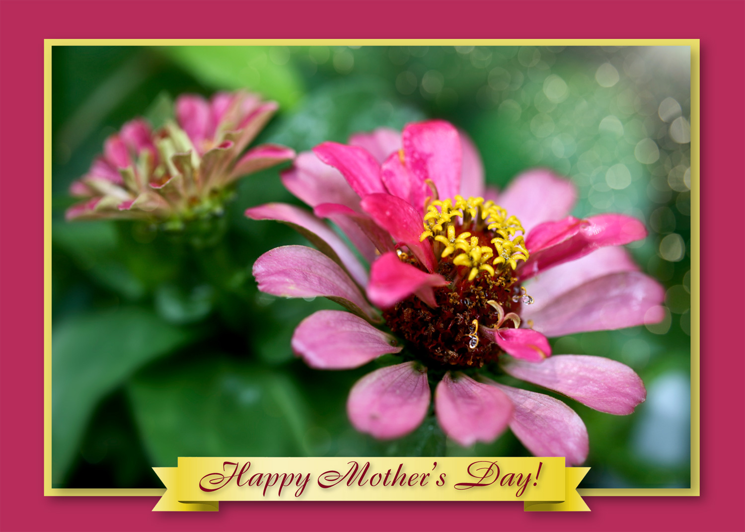Mothers Day Flower Cards Art Photo Web Studio