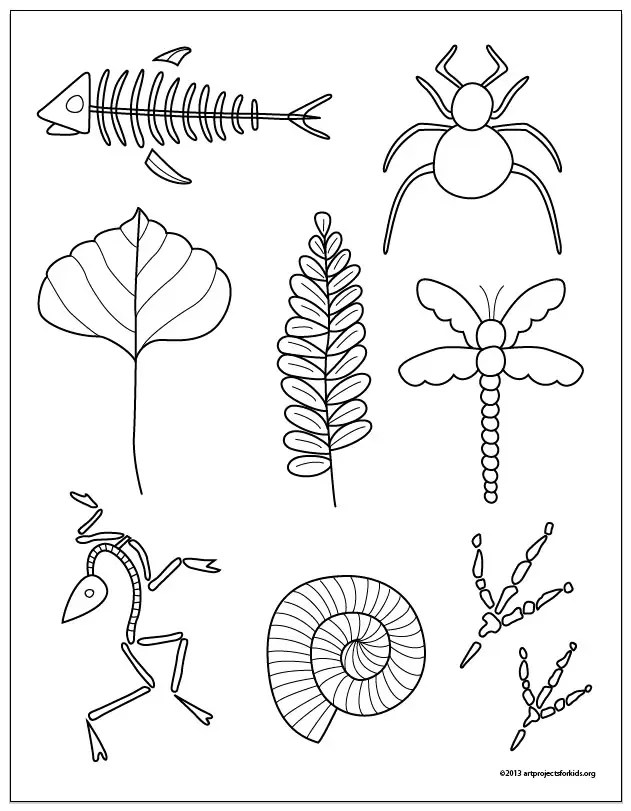 Fossil Drawings · Art Projects for Kids