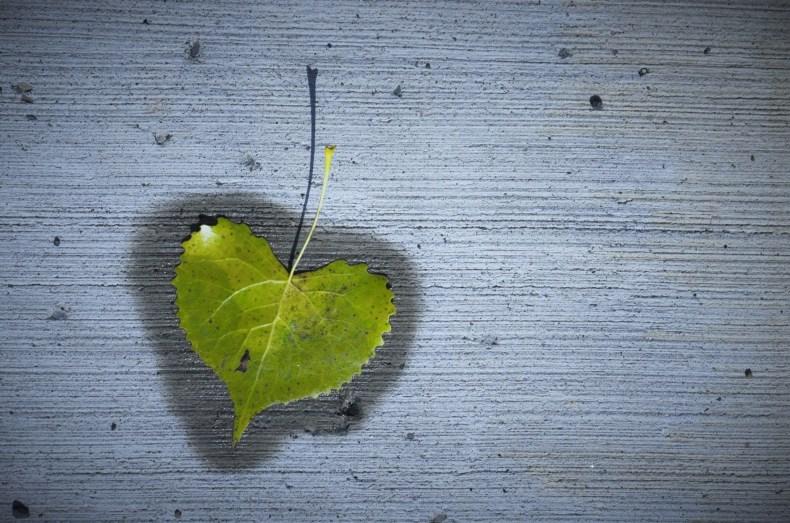_dsc5263_leaf-shadow