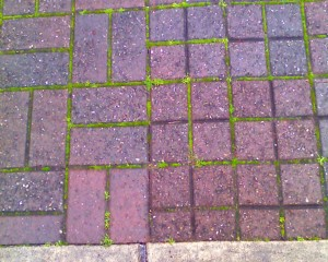 Pavement to Row Quilt